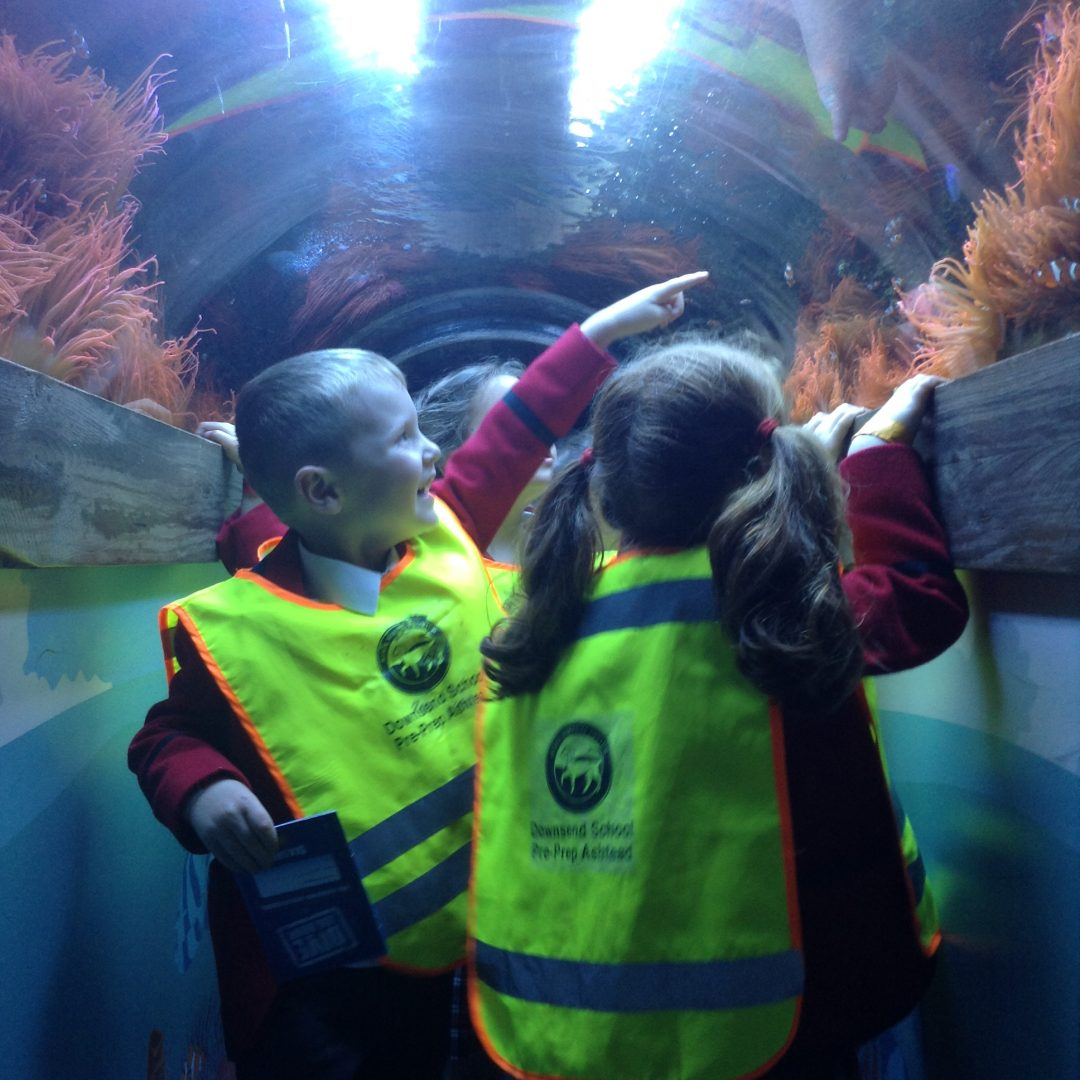 Ashtead pupils visit the aqauarium